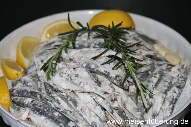 sardinen-15