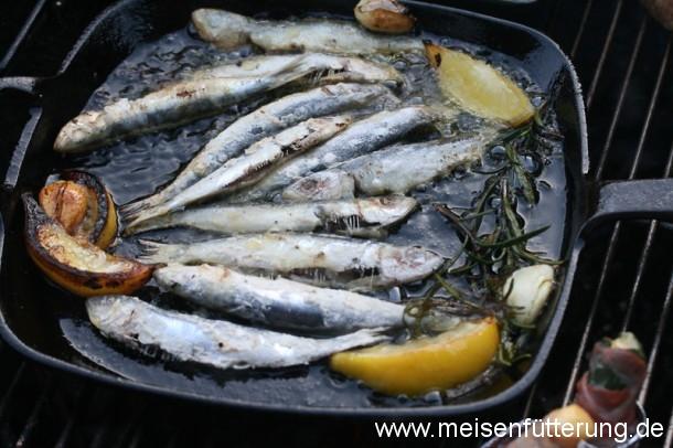 sardinen-20