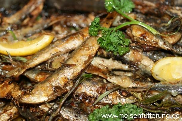 sardinen-25