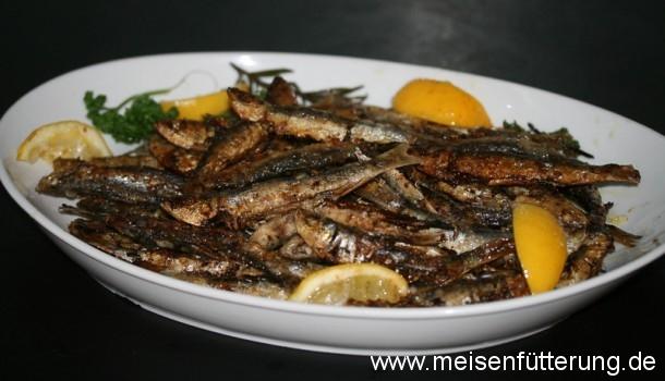 sardinen-26