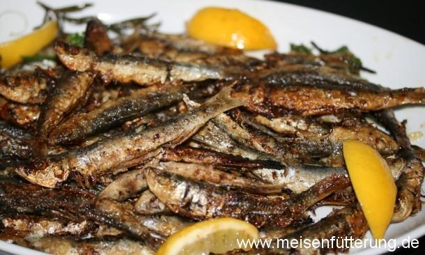 sardinen-27